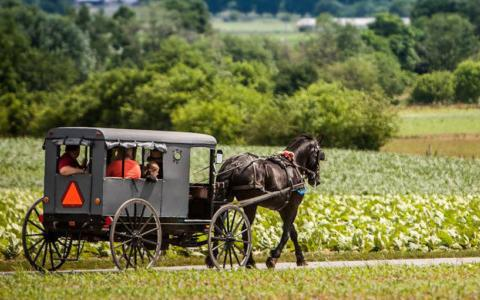 Amish Country Farmlands & 'Queen Esther'