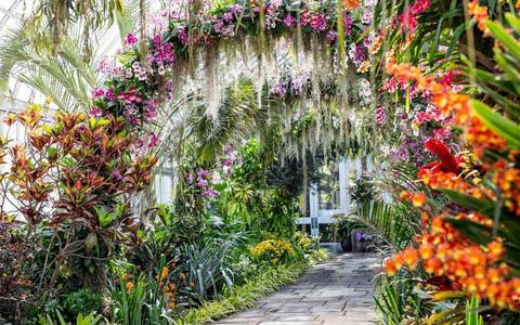 Orchid Show at NY Botanical Garden