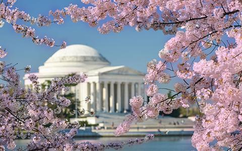 Springtime in Washington DC