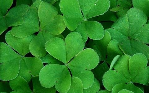 St. Patrick's Day at Gavin's Irish Country Inn